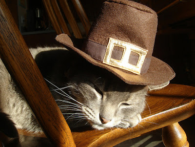 A cat with a Pilgrim hat on