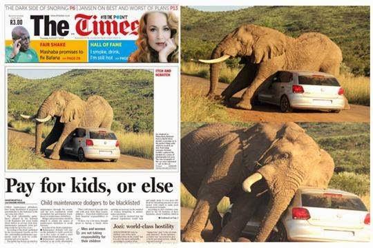 Portada periódico - elefante atacando carro parque Sudáfrica