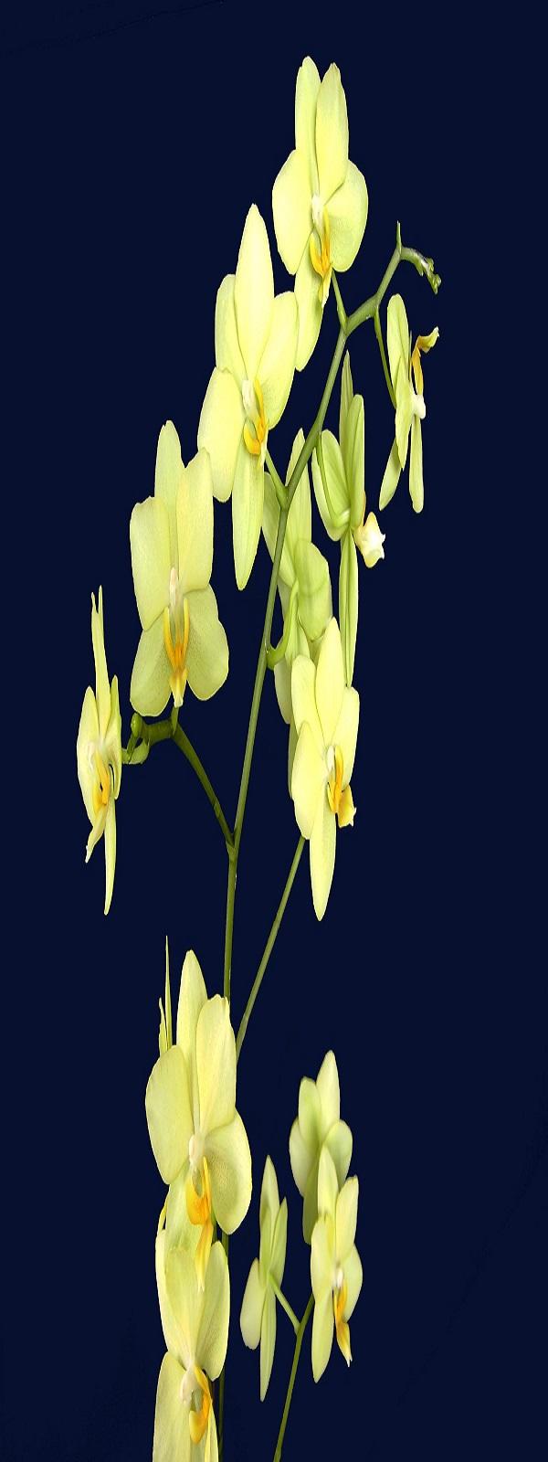 Las flores de mi amor