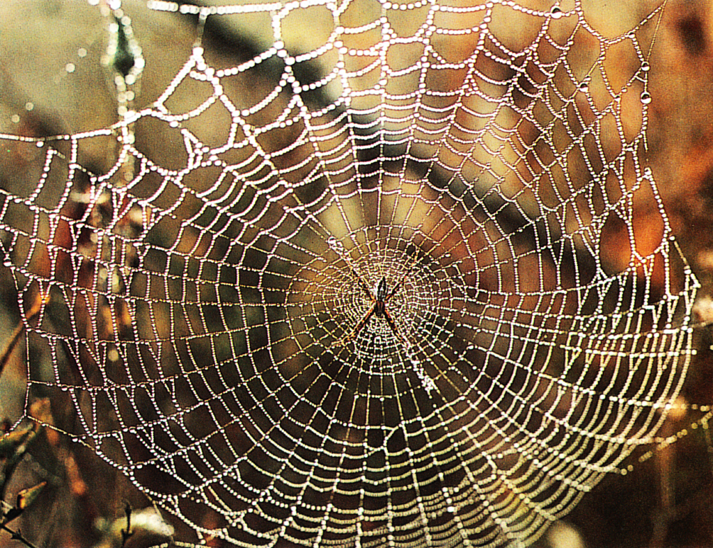 Discovering Something New : Spider Webs: Strong as Steel