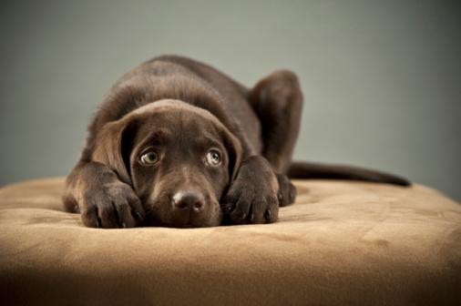 sad dog on bed Η ζωή ενός σκύλου που δεν αγαπήθηκε