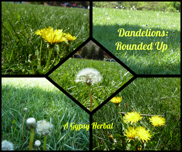 Dandelion Herb Round-up