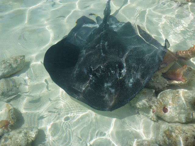 bahama wildlife cruising life cruising activities cruising destinations