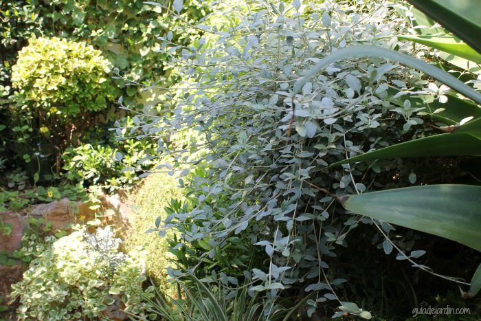 Algunos arbustos