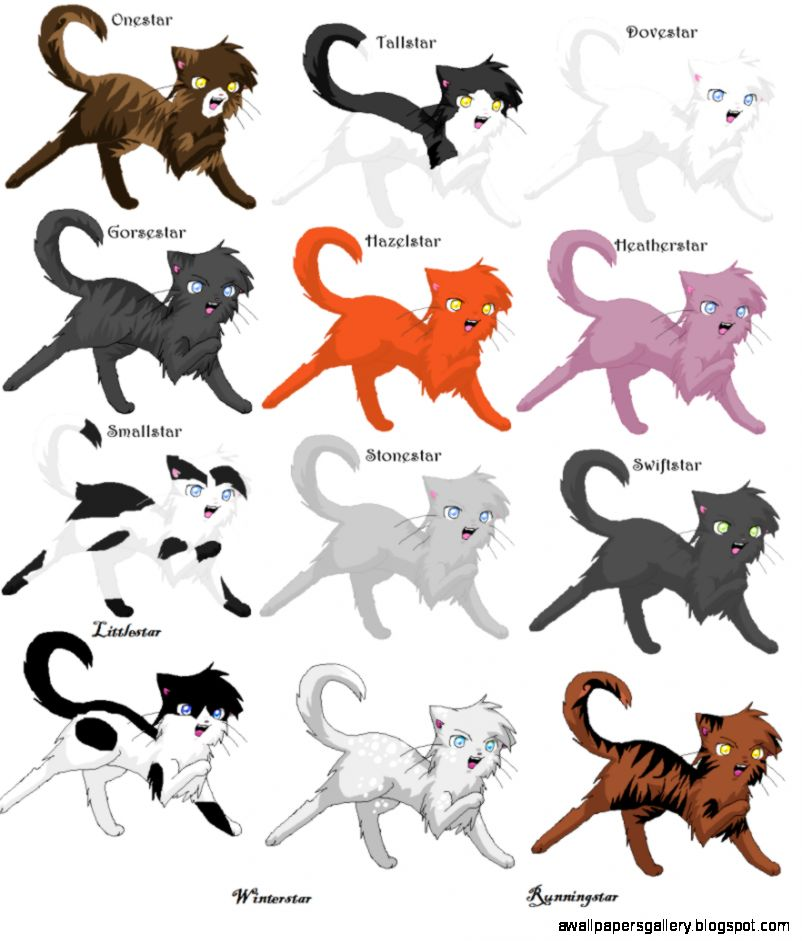 warrior cats thunderclan leaders wallpapers gallery