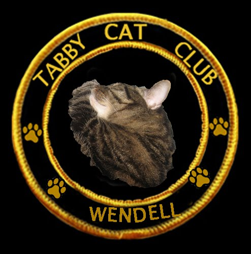 I'm in the Tabby Cat Club!