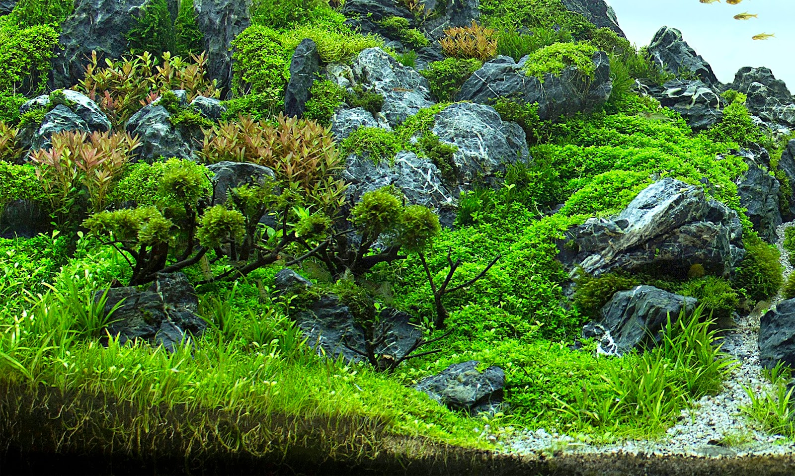 Aquascaping spain a morning of peace and calm by juan puchades - Aquascape espana ...