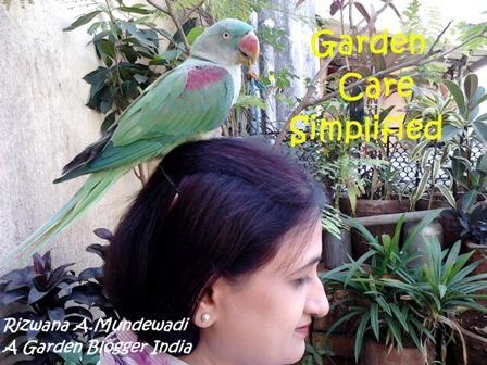 Garden Care Simplified
