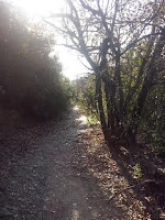 Una senda donde perderse