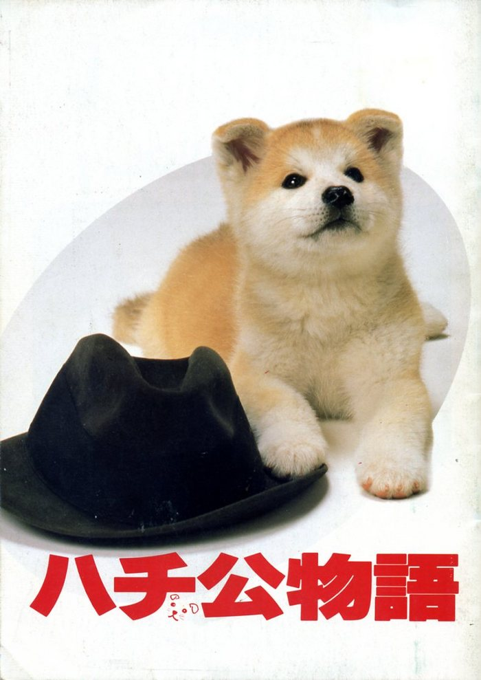 What Kind Of Dog Is Hachi In The Movie
