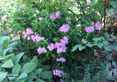 bees, Ladew Garden