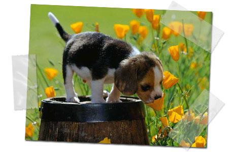 http://3.bp.blogspot.com/-cpFVd-nuMmI/UJBrAN8C_CI/AAAAAAAABG8/iq9XUf4Kj-M/s640/cachorro-oliendo-flor.jpg