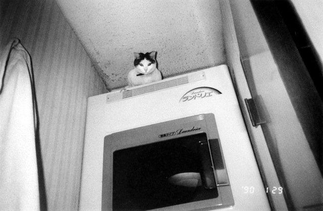 Nobuyoshi Araki Cat Nobuyoshi Araki Chiro 8