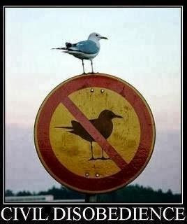 Jonathan Libertarian Seagull