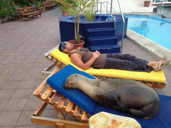 صور غريبة - صفحة 6 Funny+images+Seal-Of-Approval