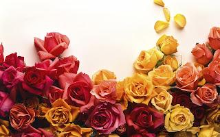 Rode roos hd wallpaper met vrouwen hand met roze roos
