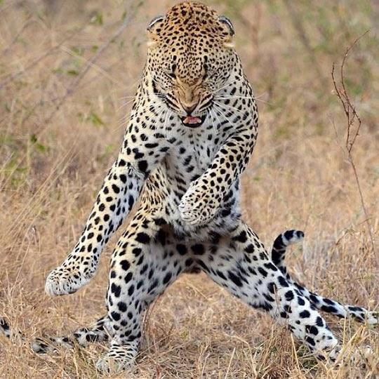 Get That Moves Like Jaguar