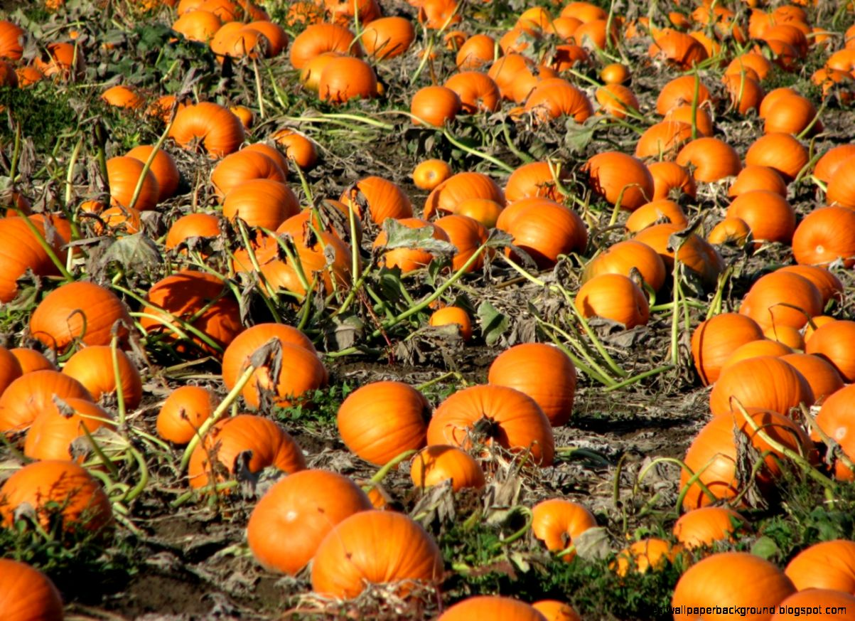 fall desktop wallpapers with pumpkins best wallpaper