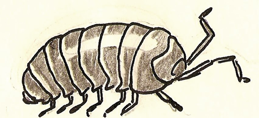 Satisfactory Comics Animal Alphabet I is for Isopod