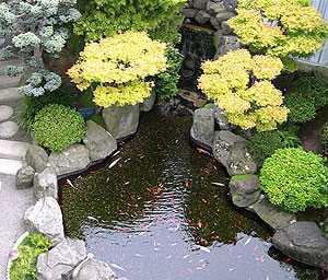 Jasa Desain Taman on Kami Juga Menyediakan Berbagai Tanaman Hias Dengan Kualitas Bagus