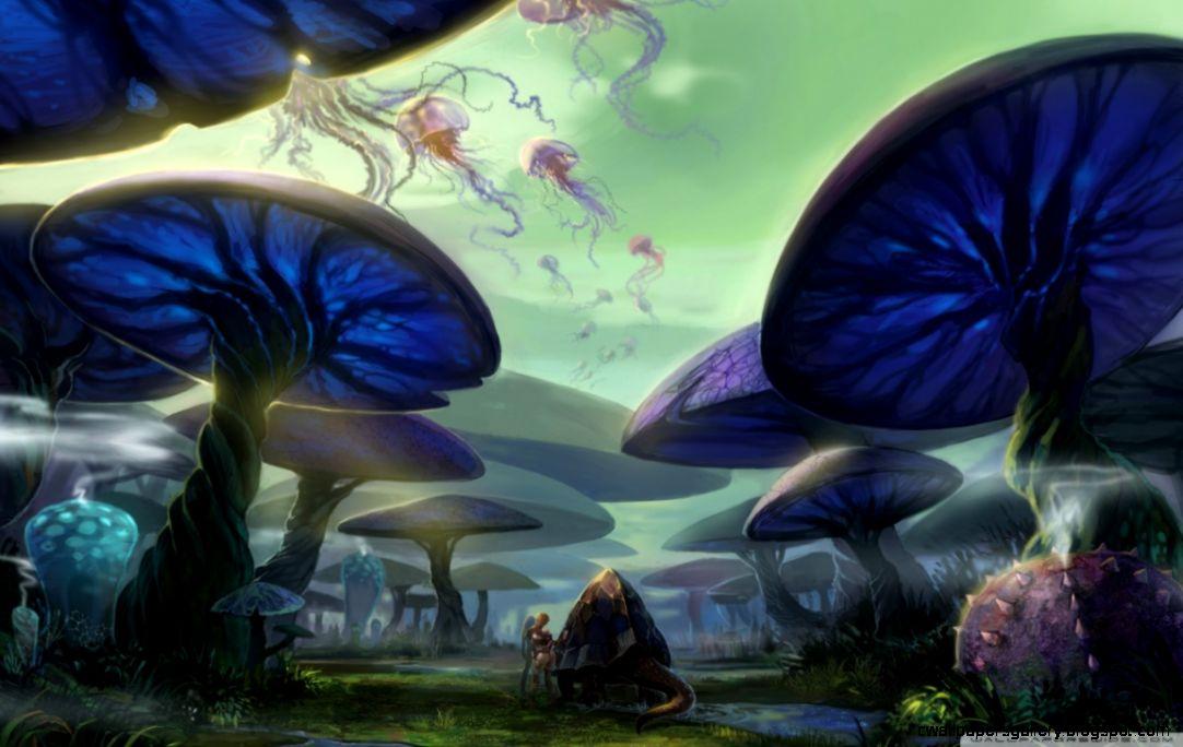 Mushroom Forest HD desktop wallpaper  High Definition  Mobile