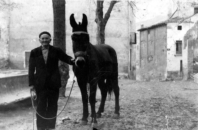 cayetano-manzano-camañas-torrebaja-mulo