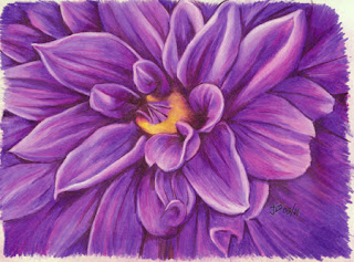 Finished Color Pencil Drawing of a Dahlia Flower before cropping