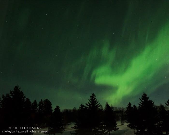 Prairie Nature: Northern Lights over Muenster, Saskatchewan