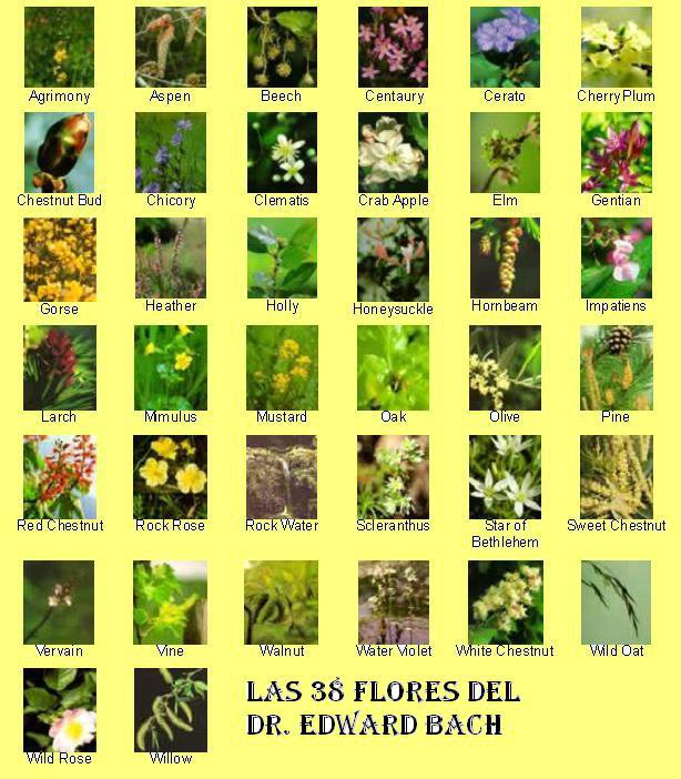 flores y sus nombres: