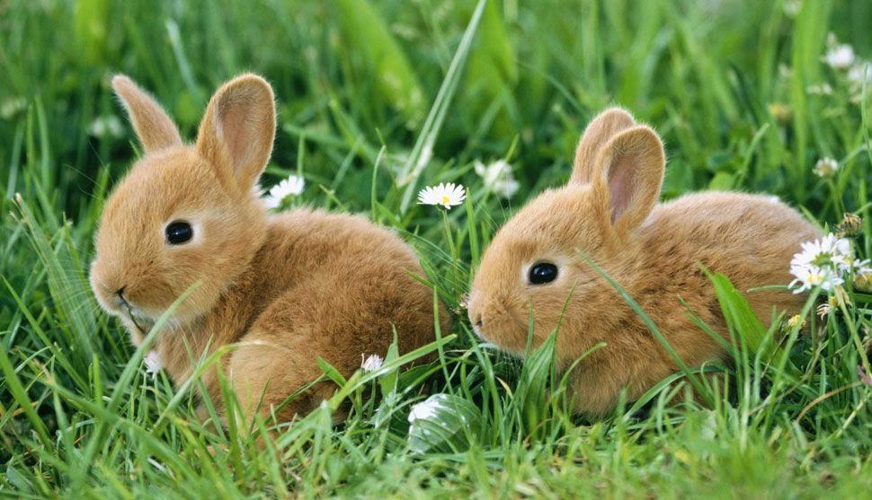 Preferência Os 10 animais mais fofos do mundo | Maliária XW08