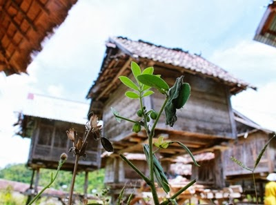 KM. LENGGE WAWO,- Foto Benda Cagar Budaya situs lengge wawo, oleh: b9
