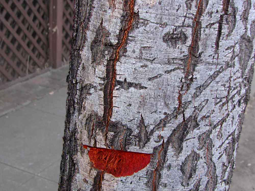 red lips on a tree trunk (c) David Ocker