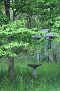Clay Grouse backyard birdbath and pottery studio