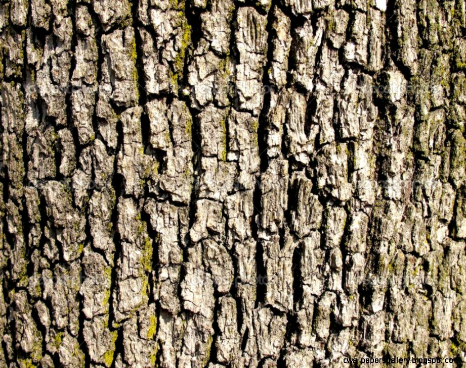 Bark of a old oak tree texture — Stock Photo © cristalvi 7375953