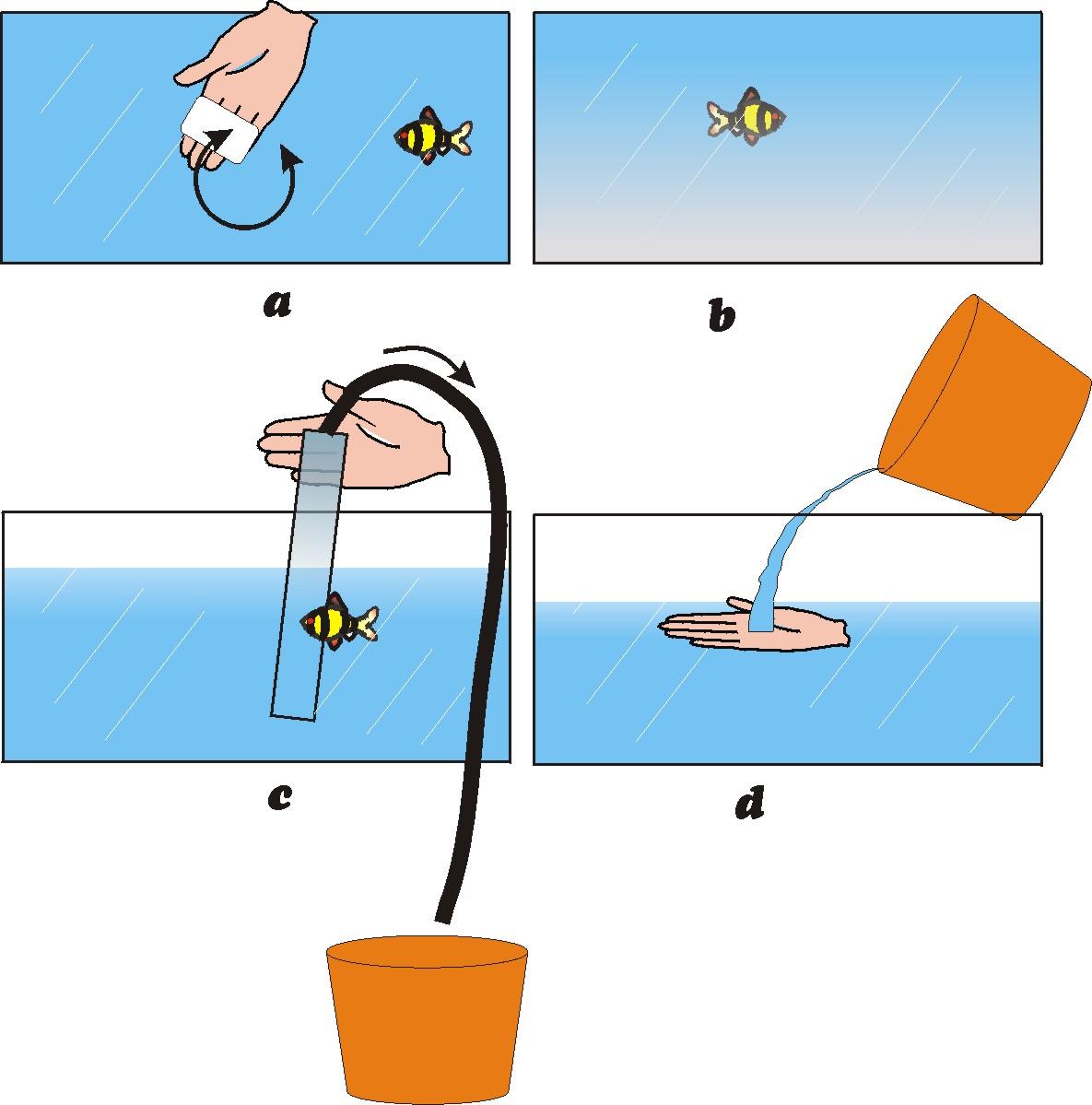 como cambiar el agua y limpiar una pecera como se hace