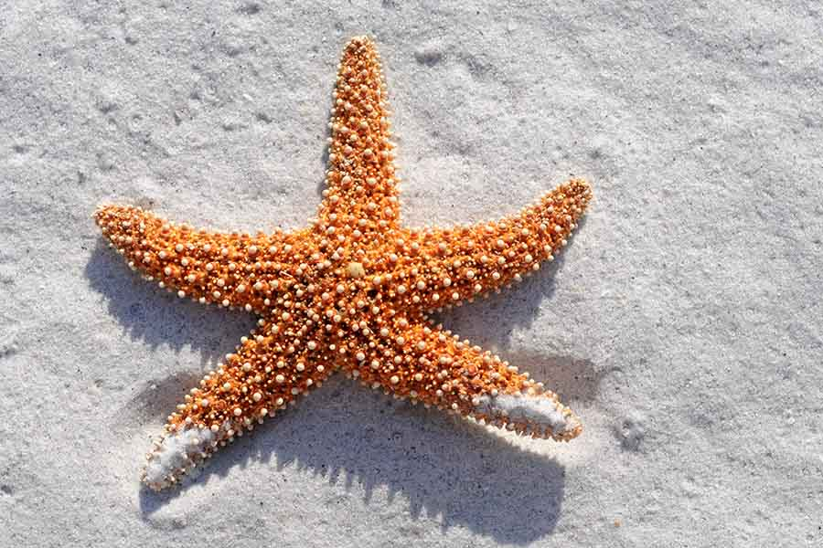 Regenerate Starfish Arm Pictures To Pin On Pinterest