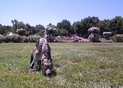 wolf-statue goose deterrent 2