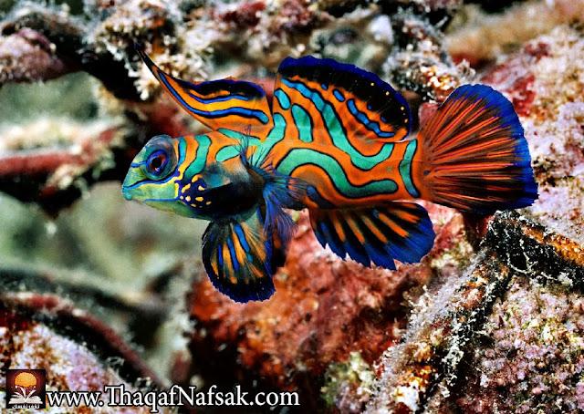 أجمل 10 أسماك ملونة في عالم البحار '' بالصور '' 1.jpg
