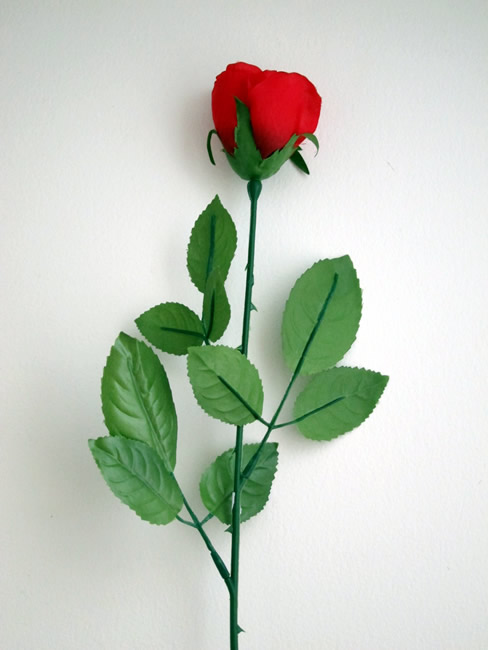 valentine single rose pictures , photos and hd wallpapers, Ideas