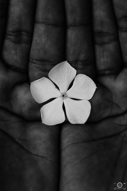 Flower, Flowers, photography, shashank, shashank mittal, shashank mittal photography, hands, monochrome