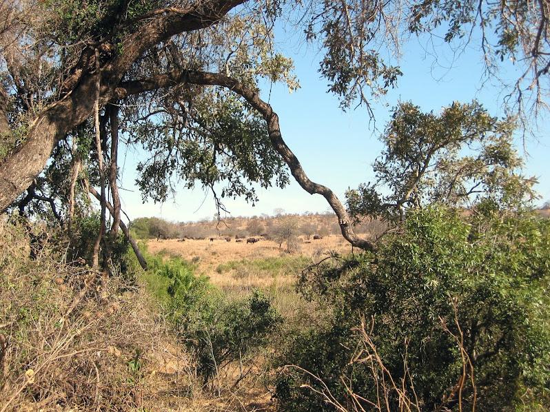 Kruger National Park Süd Africa