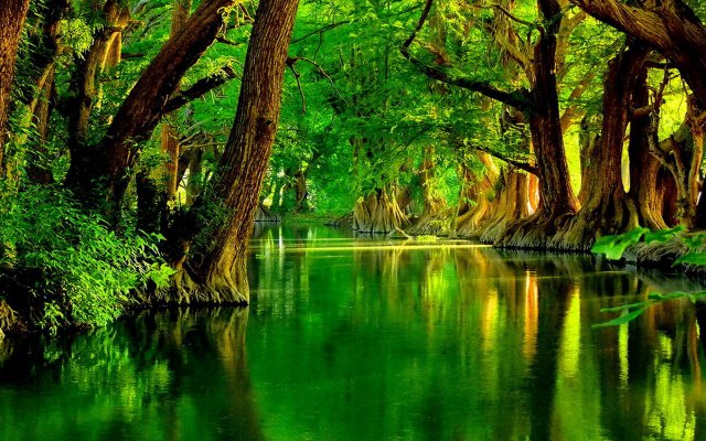 Green River Wallpaper Samsung Galaxy Tablets Wallpapers