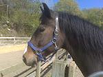 Nello, My Horse