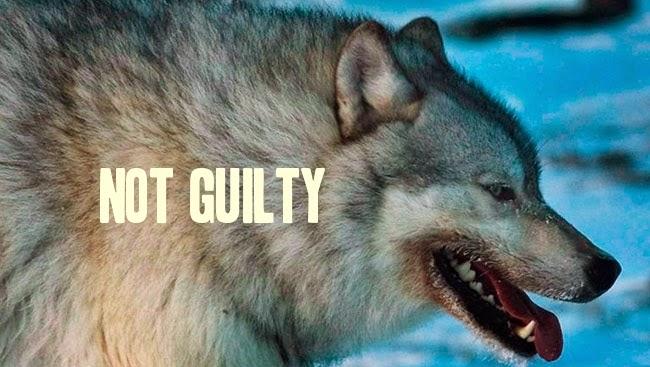 Lethal control of wolves backfires on livestock