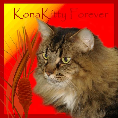 Kona Kitty