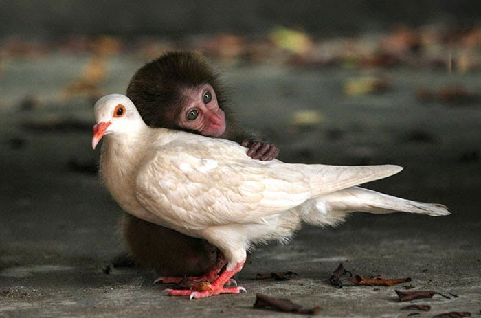 #8 Monkey And Pigeon - Unusual Animal Friendships That Are Absolutely Adorable!