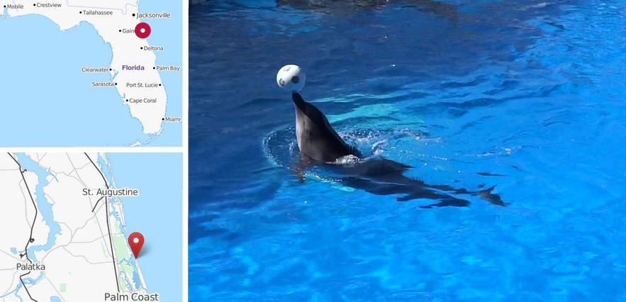 Marineland Dolphin Adventure, St. Augustin Florida
