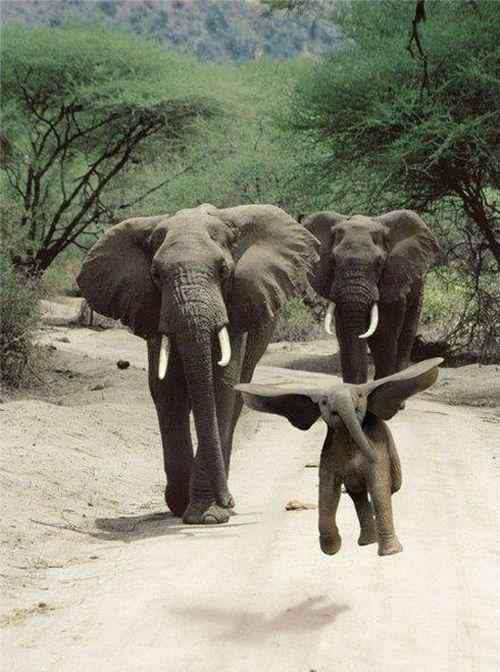 Siete elefantes se balanceaban