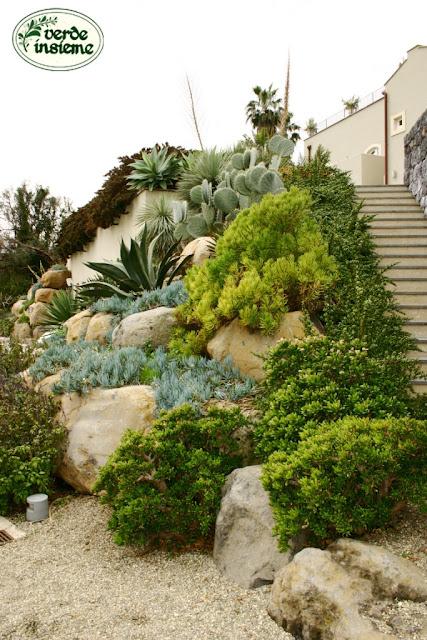 Specie arbustive da fiore a ridotte esigenze idriche - Giardino mediterraneo ...