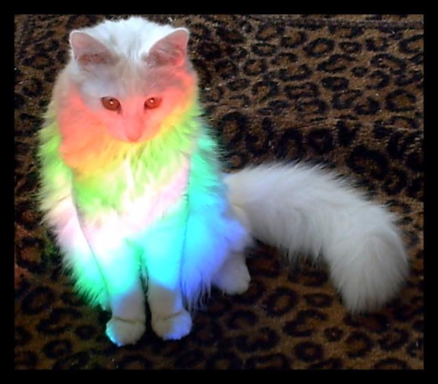 amazing cat photo